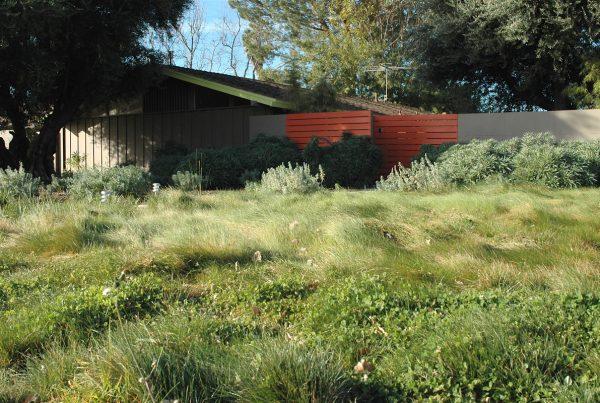 """""""modern garden"""", """"caliofrnia landscape"""", """"california garden"""", """"los angeles garden"""", """"place landscape"""", place design"""", """"victoria pakshong"""", """"sustainable garden"""", """"california native garden"""", """"drought tolerant garden"""", """"native grass"""""""