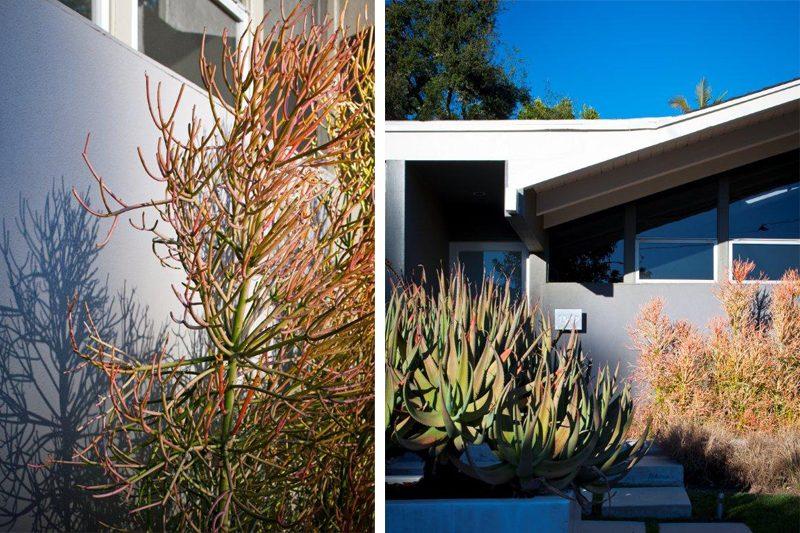 """caliofrnia landscape"", ""california garden"", ""los angeles garden"", ""place landscape"", place design"", ""victoria pakshong"", ""sustainable garden"", ""california native garden"", ""drought tolerant garden"", ""hillside garden"", ""hillside landscape"""