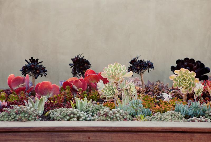 Southern California succulent garden