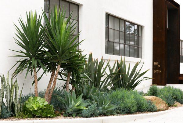 Hayden Tract succulent garden